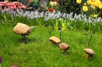 Duck family walking cross lawn