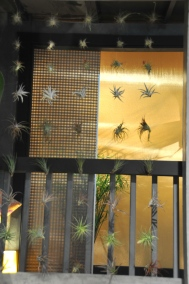 Nice idea for a decoration ... but don't know if I'd like looking at spider plants all day