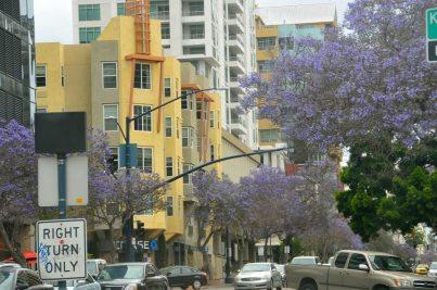 Trees in full bloom
