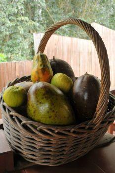 Big basket of big fruit
