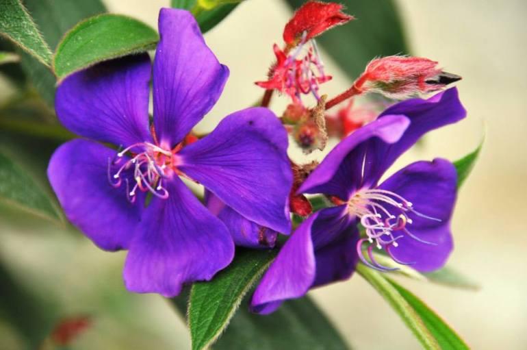 purple flowers3