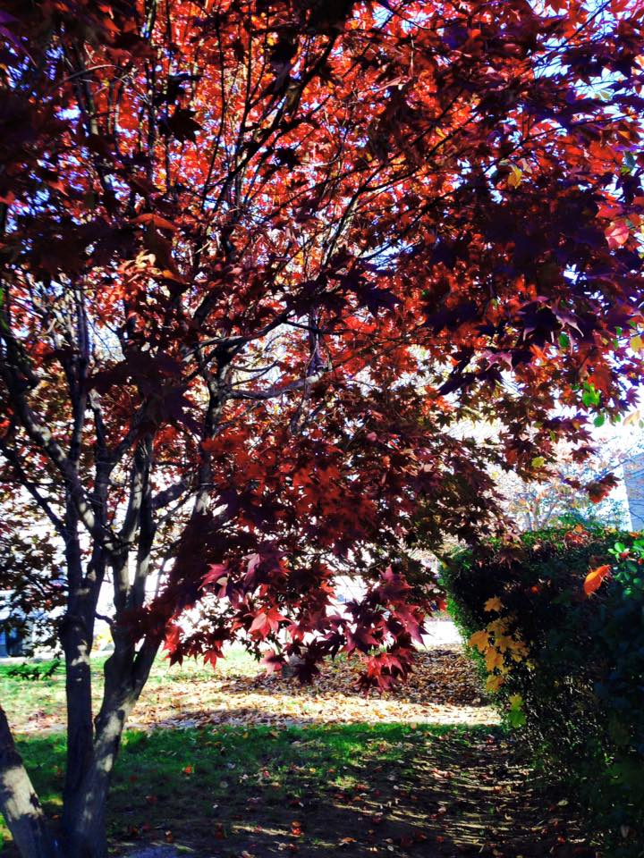 red tree3