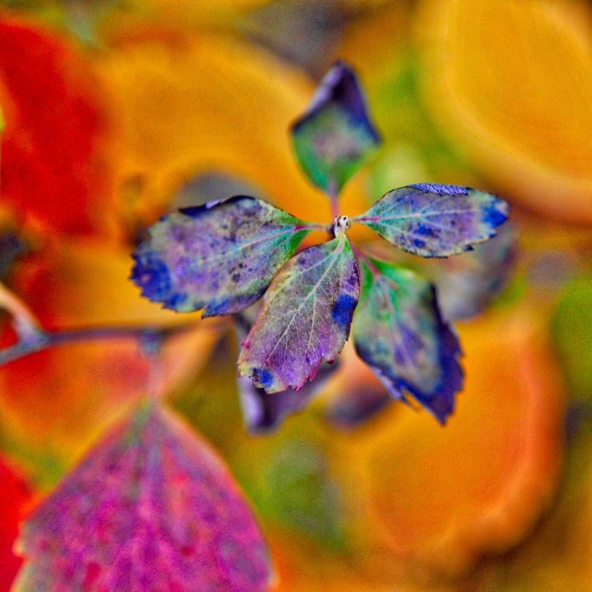 blue-leaf
