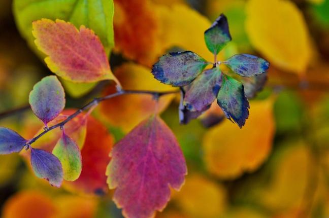 blue-leaf2