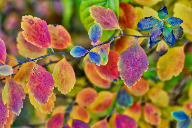 multi-colour-leaves